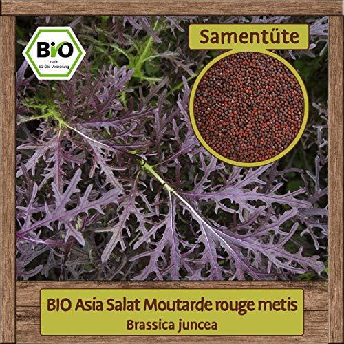 BIO Asia Salat Samen Moutarde rouge metis Pflücksalat (Brassica juncea) Asiasalat Gemüsesamen ganzjährig & winterhart