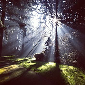 20 Nature Rain Sounds for Yoga, Meditation, White Noise, Sleep Aid and Massage