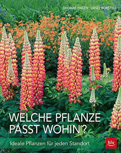Welche Pflanze passt wohin?: Ideale Pflanzen für jeden Standort