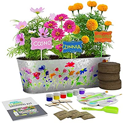 Dan&Darci Paint & Plant Flower Growing Kit - Grow Cosmos, Zinnia, Marigold Flowers : Includes Everything Needed to Paint & Grow - Great Gardening Science Gifts for Girls and Boys Ages 6 7 8 9 10