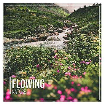 # 1 Album: Flowing Nature