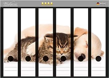 rot wei/ß getigert in Premiumqualit/ät Gr/ö/ße 8 x 3,5 x 30 cm Wallario Ordnerr/ücken Sticker S/ü/ße Katze mit gro/ßen Augen passend f/ür 8 schmale Ordnerr/ücken