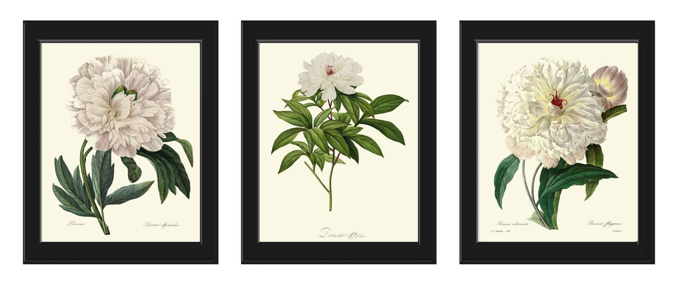 Botanical Print Set of 3 Antique Redoute Sacramento Mall White P Beautiful Large Ranking TOP11