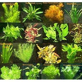 Mühlan 6 x Vordergrund- + 6 x Mitte- und Hintergrundpflanzen