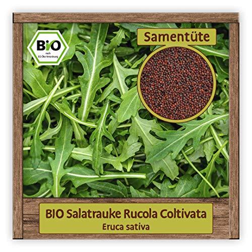BIO Rucola Samen Coltivata aus Italien Salatrauke Kräutersamen Salat Gemüse