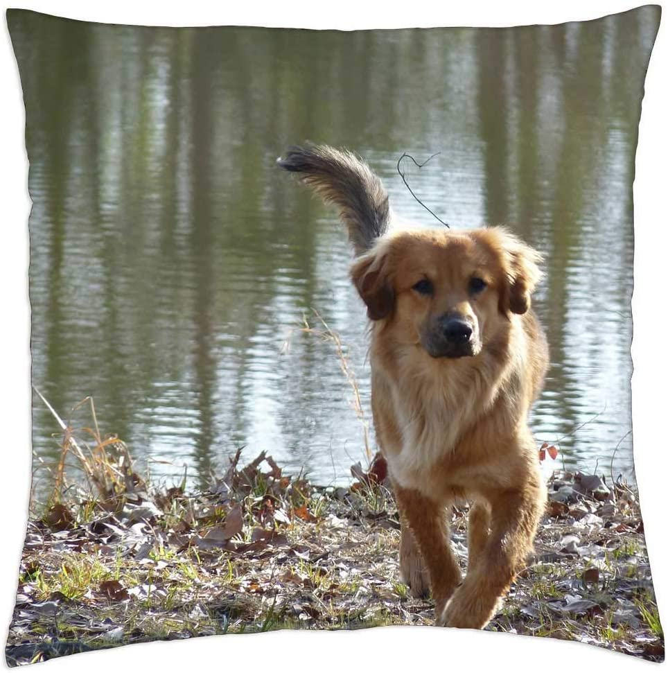 LESGAULEST Throw 2021 model Very popular Pillow Cover 24x24 inch Mutt Dog Canine - Pet