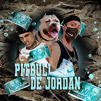Pitbull de Jordan