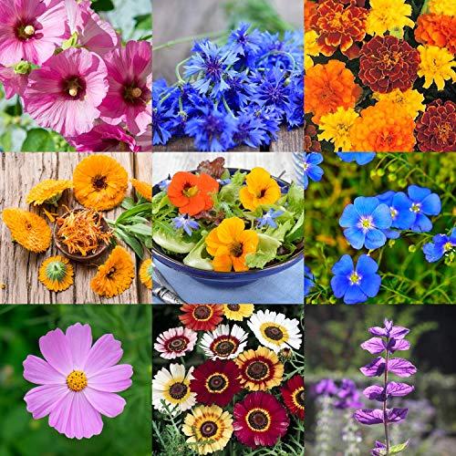Prademir Essbare Blumen Samen Set 8 x verschiedenes Blumen Saatgut Saat Dekoration essbare Blüten Geschenk Pflanzen