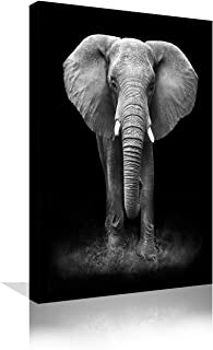 Best white elephant images hd Reviews