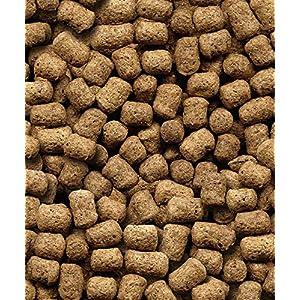 MALTBYS' STORES 1904 LTD 5kg COMPLETE HEDGEHOG FOOD