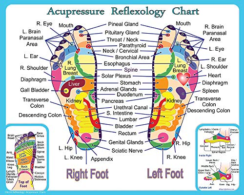Reflexology and Acupressure Chart for the Feet, Print 8x10 (8x10)