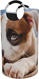 N\A Panier à Linge Rond, Panier à Linge Pit Bull Terrier Seau Pliant Sac à vêtements bacs de Rangement pour Organisation d...