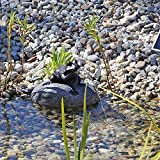 CLGarden Set Frosch Wasserspeier NSP10 Teichfigur Solarbrunnen mit Solar Pumpe für Teich Gartenteich