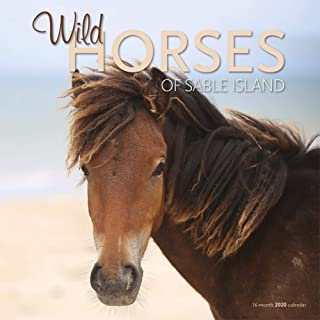 Horses of Sable Island 2020 12 x 12 Inch Monthly Square Wall Calendar by Wyman Publishing, Animals Horse