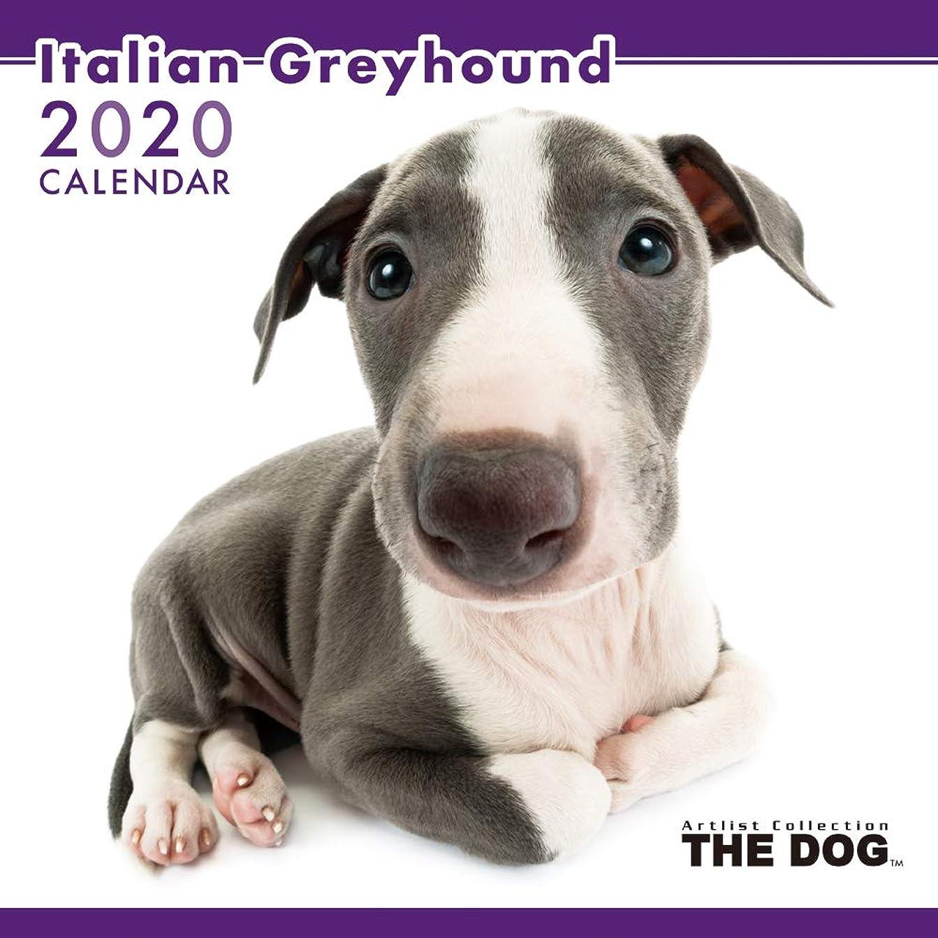 黒くする剥離疲労THE DOG カレンダー イタリアン?グレイハウンド 2020年
