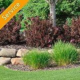 Shrub Planting - Replacement - 4 Shrubs