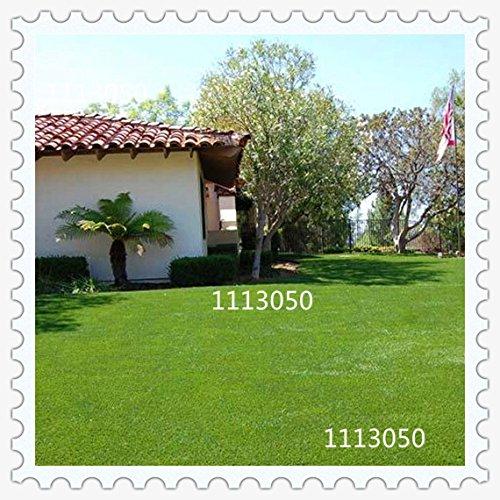 100pcs de haute qualité Chine gazon semences de gazon Semences de l'herbe