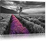Lavendelfeld mit einsamen Baum schwarz/weiß Format: 120x80 auf Leinwand, XXL riesige Bilder fertig gerahmt mit Keilrahmen, Kunstdruck auf Wandbild mit Rahmen, günstiger als Gemälde oder Ölbild, kein Poster oder Plakat