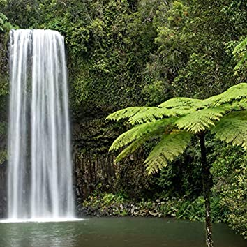 Rain Forest Sounds in Australia
