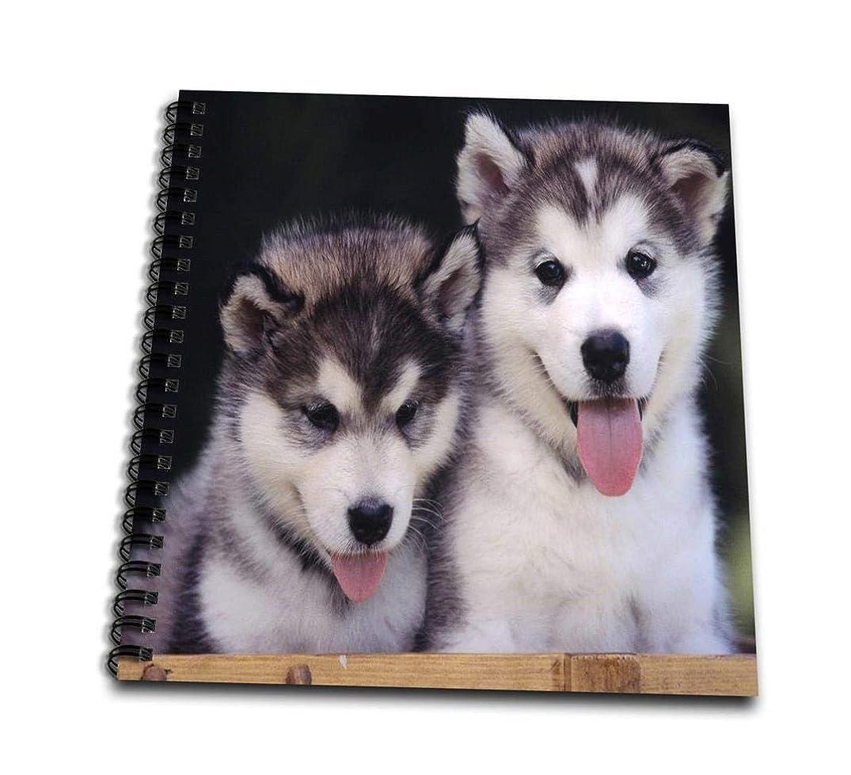 3dRose db_55166_1 2 Alaskan Malamute Puppies-Drawing Book, 8 by 8-Inch