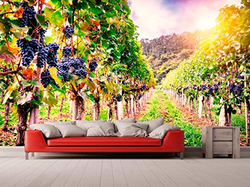 Fotomural Vinilo para Pared Viñas   Fotomural para Paredes   Mural   Vinilo Decorativo   Varias Medidas 600 x 300 cm   Decoración comedores, Salones, Habitaciones.