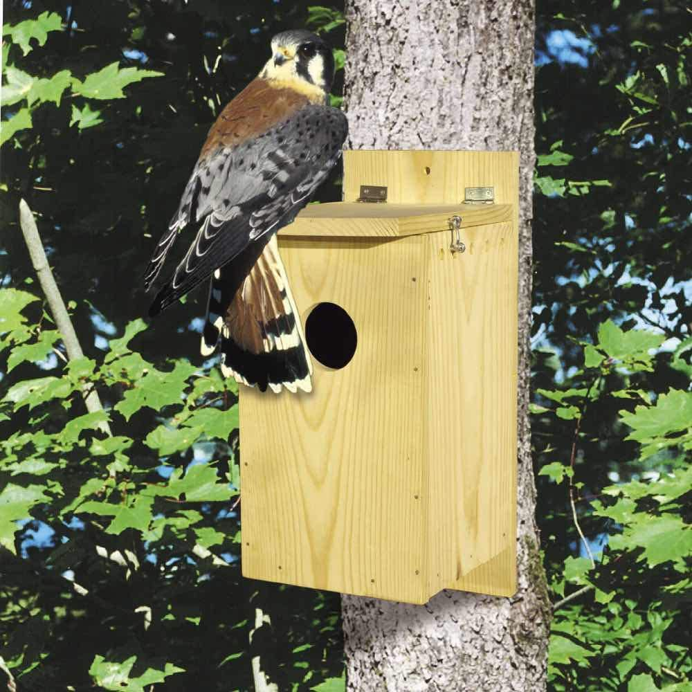 WoodworkersWorkshop Inexpensive Surprise price Woodworking Plan to Build Nes Small A Raptor