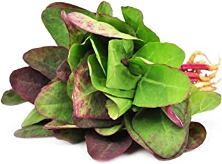 Best red orach plant Reviews