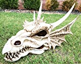 Ebros Gift Large 18' Long Erathia Elder Dragon Skull Fossil Statue Figurine Might and Magic for Medieval Dragon Era Fans Game of Thrones Lovers Dungeons and Dragons Fantasy Decor