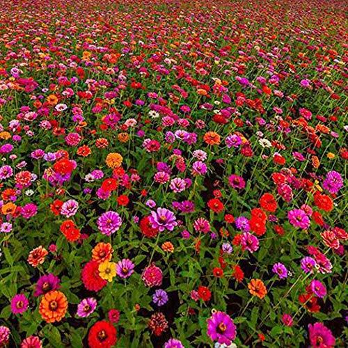 Keland Garten - 10 Stück Blumensamen wie Rosen, Levkoje, Kamelie, Wildes Stiefmütterchen, Tagetes patula, Beet- und Gruppenpflanze für Einfassungen, Blumenschalen, Balkonkästen