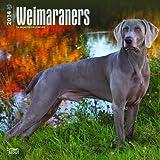 2014 weimaraner dogs calendat