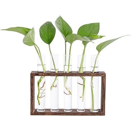 TONGXU Vase en Verre pour Plante dhydroponique avec Support en Bois Vase de bulbes Ampoule pour Jardin D/écoration de Maison Bureau