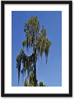 Actorstion Swamp Cypress with Spanish Moss Growing on it Bedroom Black and White Structure Canvas Prints,091751 for Living Room,16''x20''