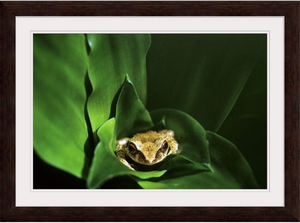 Coqui Frog Art Print Home Decor Wall Art Poster