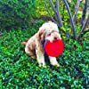 Easy Disk Toy and Game - Soft Catch - Flying Disc - Indoors or Outdoor for Kids, Beginners or Advanced Players, Adults & Families #5
