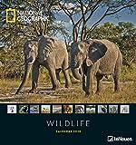 National Geographic Wildlife 2020 - Posterkalender - 45x48cm - Tierkalender - atemberaubende Fotografie -