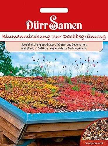 Blumenmischung zur Dachbegrünung   Blumensamen von Dürr-Samen