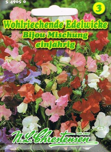 Wohlriechende Edelwicke 'Bijou-Mischung' frühblühend, niedrig, buschig 'Lathyrus odoratus' Wicke