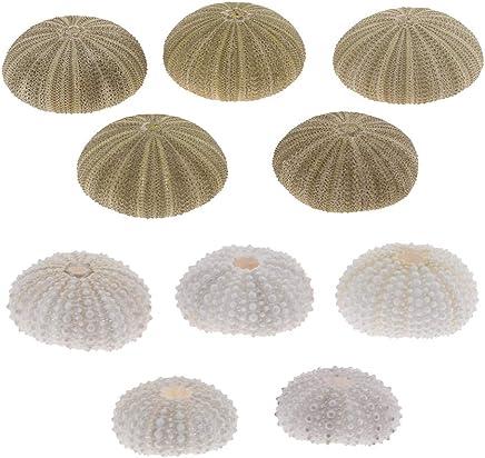 FLAMEER 10 Pcs Conchas de Erizo de Mar Decoración de Hábitats de Reptiles Anfibios
