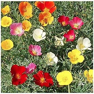 3000 Mixed California Poppy Seeds - State Flower, Golden Orange Poppy, Re-Seeds