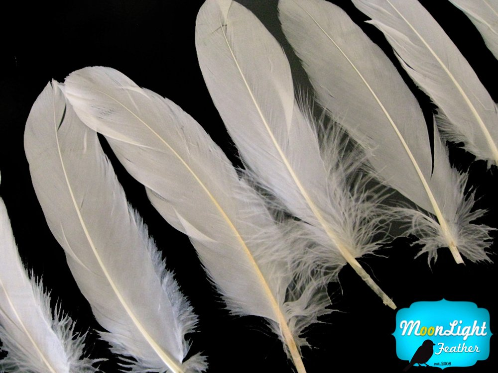 Moonlight Feather Popular standard 1 Pack - Miami Mall Feathe Loose Satinettes Ivory Goose