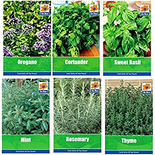 HERB COLLECTION 4- selection of 6 Fresh Herb Seeds Oregano, Coriander, Sweet Basil, Mint, Rosemary & Thyme:Hashflur