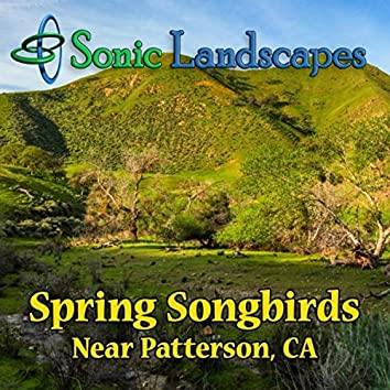 Spring Songbirds