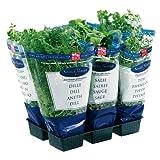 Obst & Gemüse Bio Küchenkräuter im Topf - 8 Stück (1 x 1 Stk)