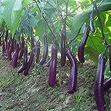 100 piezas semillas de berenjena larga blancos asiáticos semillas de frutas y verduras planta alta tasa de germinación para el hogar y jardín planta fácil de cultivar
