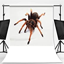 Tarantula Isolated on White Background Photography Backdrop,081394 for Video Photography,Flannelette:6x10ft