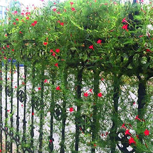 XINDUO Balcony Flower Seeds,Easy Living Climbing Plant Chlorella Seeds-50 capsules,Seasons Ornamental Plants Flower Seeds