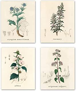 Best botanical room decor Reviews