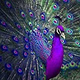 KTHOFCY 5D DIY Diamond Painting Kits for Adults Kids Peacock Full Drill Embroidery Cross Stitch Crystal Rhinestone Paintings Pictures Arts Wall Decor Painting Dots Kits 15.7X15.7 in