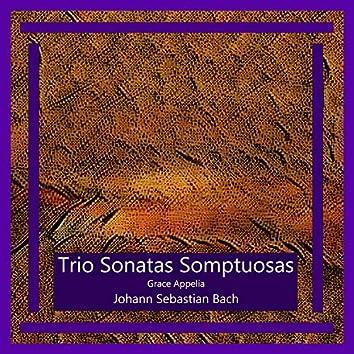 Bach: Trio Sonatas Somptuosas