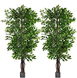 2 Pack 6.5'/pc Ficus Silk...